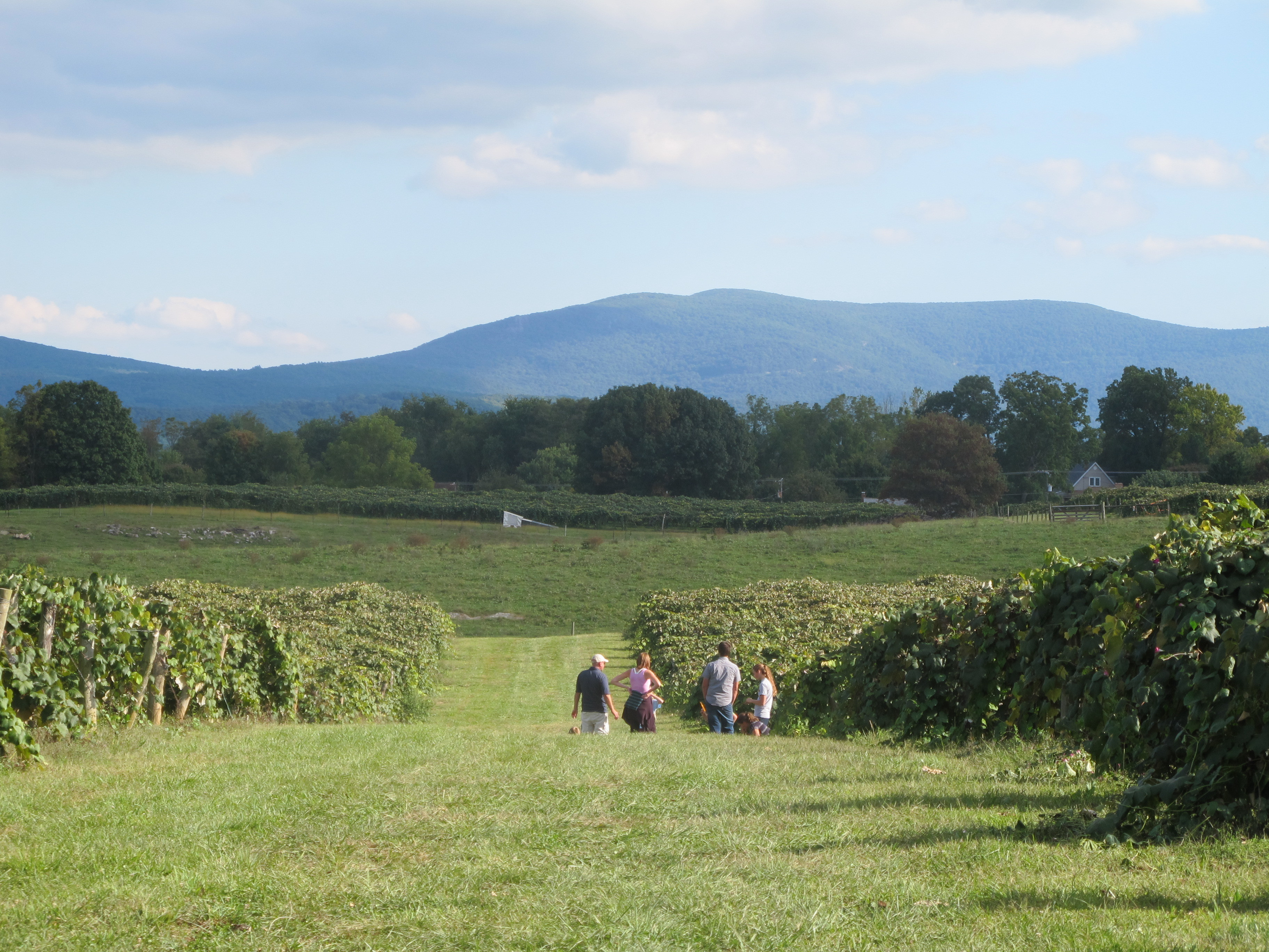 Enjoying the afternoon sun and views of the Blue Ridge Mts from Wenger Grapes. Family activities. Vineyard