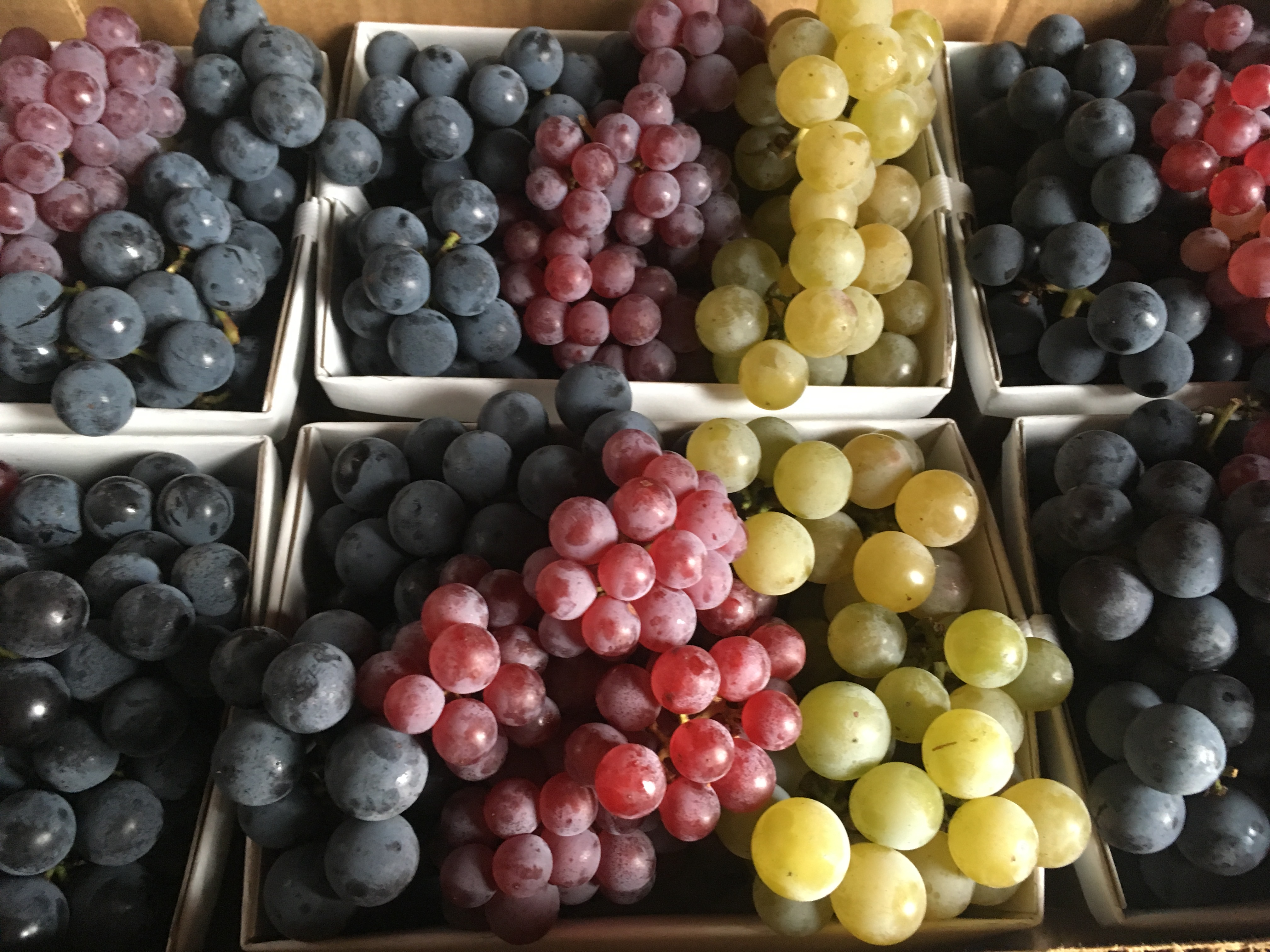 Concord, Niagara and Delaware grapes ready for Charlottesville's City Market.