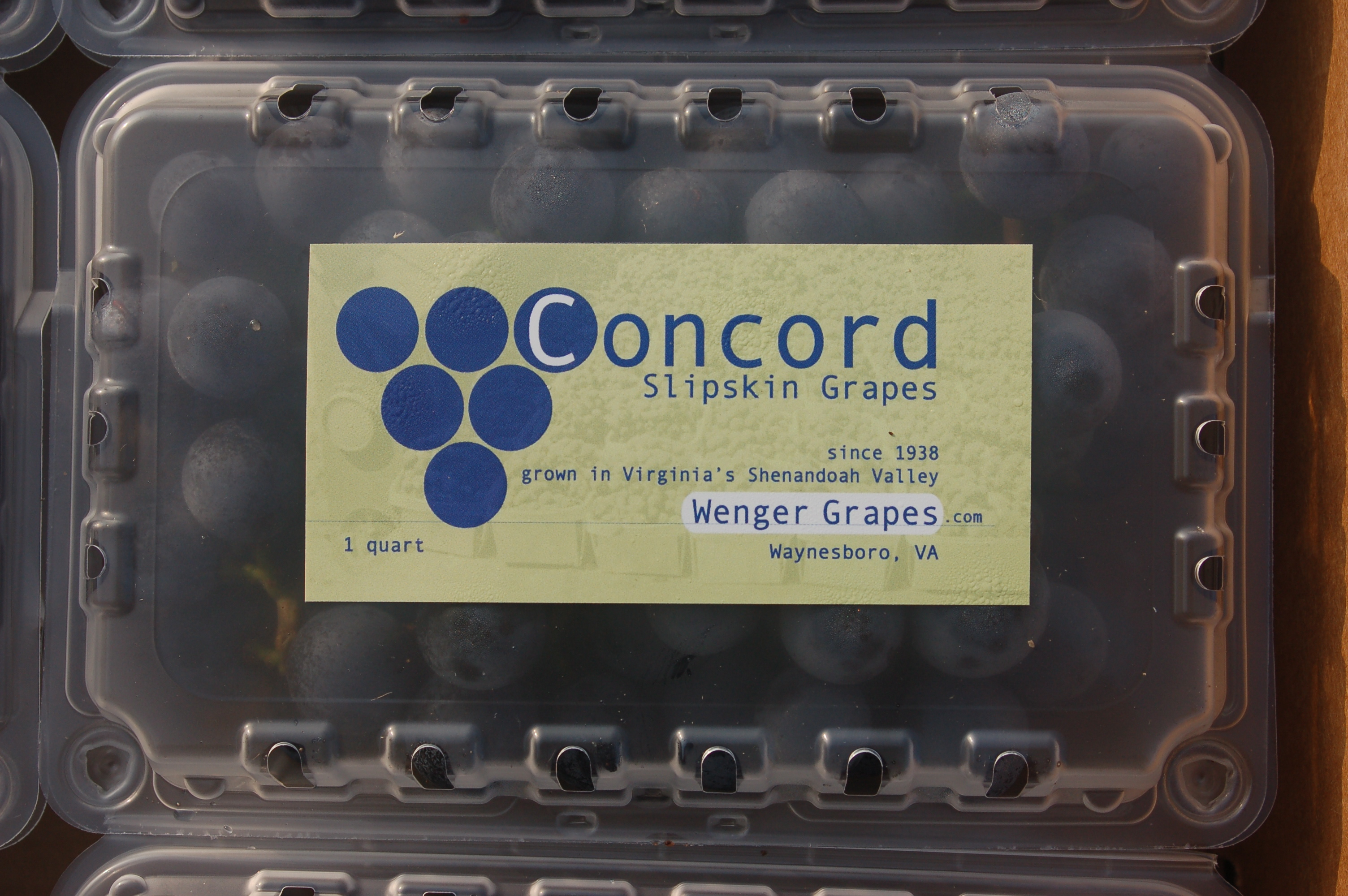 Wenger concord grapes ready for market. 1 quart clamshell. Slipskin grapes grown in Viginia's Shenandoah Valley